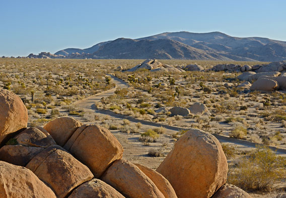 Getting to Joshua Tree